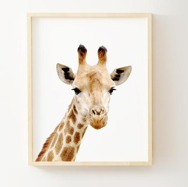 animal11c PIC11.jpg