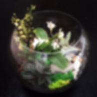 florarium.jpg