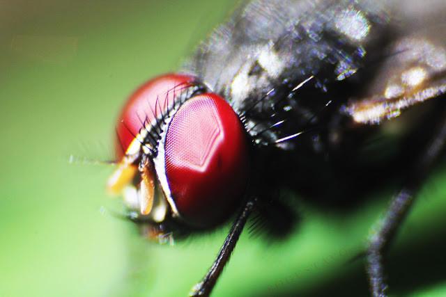 © Gustavo Bô [mosca]
