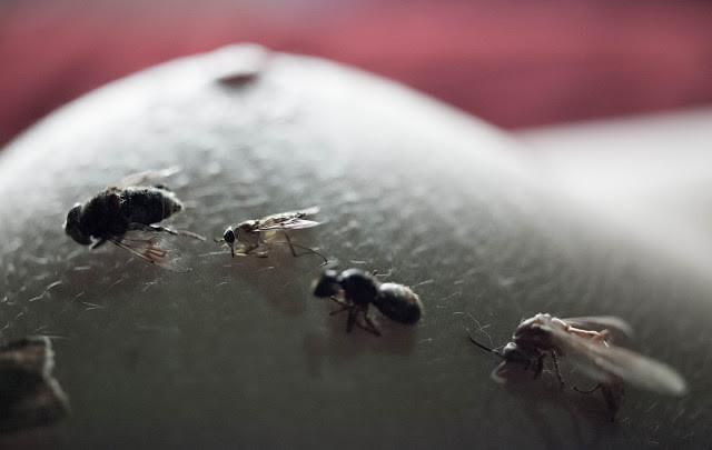 © Andréa C. Scansani [insetos]