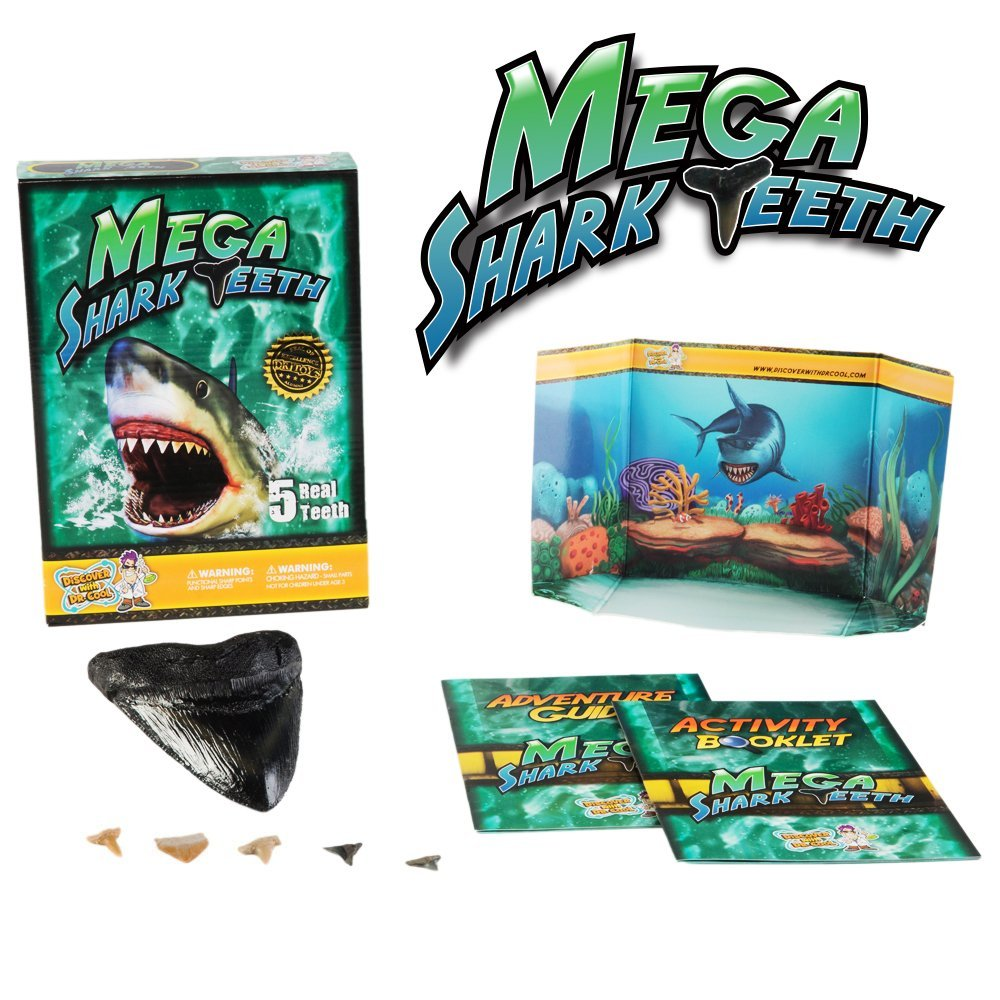 Megalodon Shark Tooth Science Kit | Discover with Dr  Cool