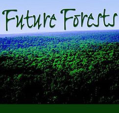 A Look at Sustainable Harvesting in a Hardwood Forest