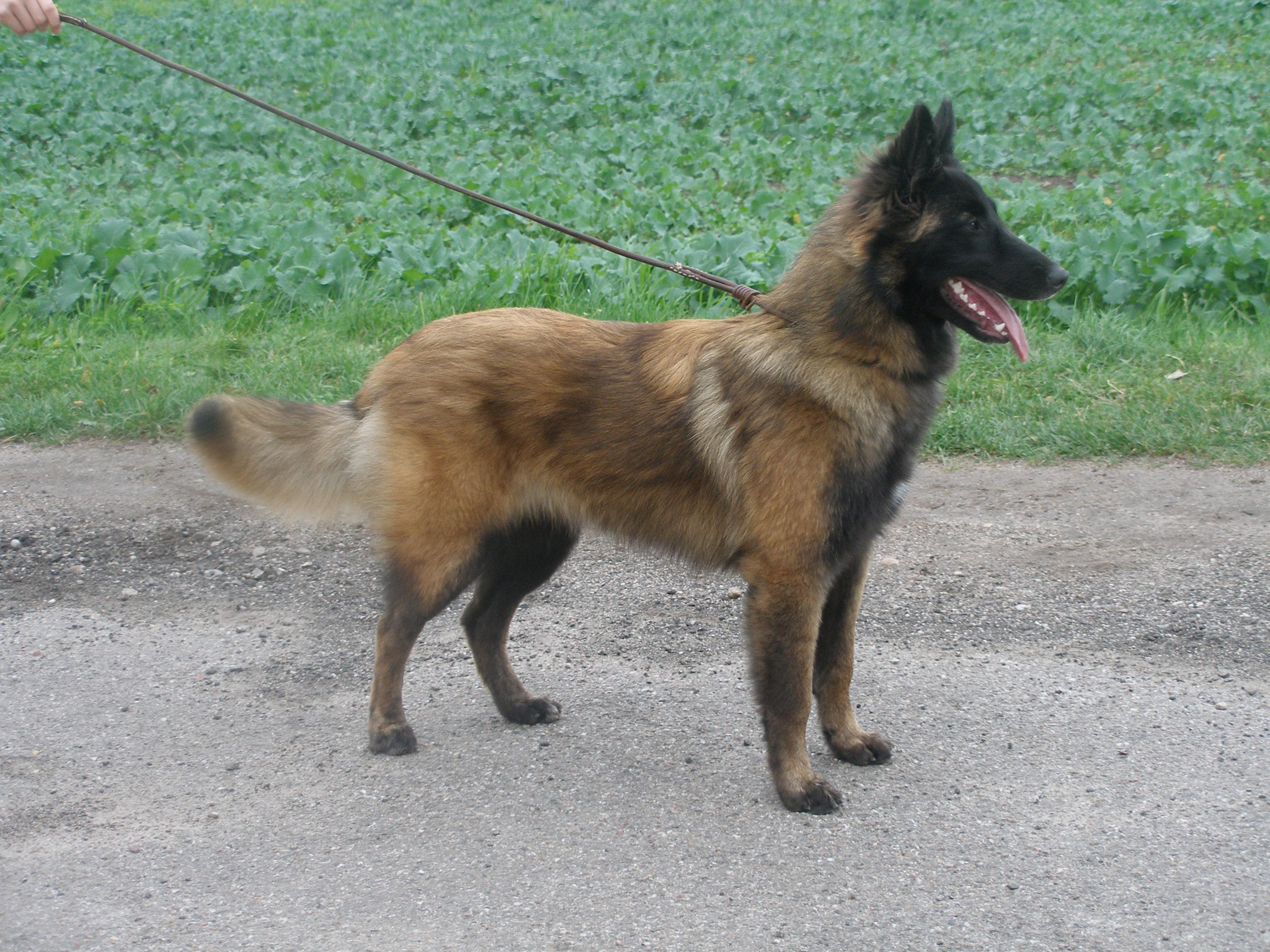 aichaunghund7