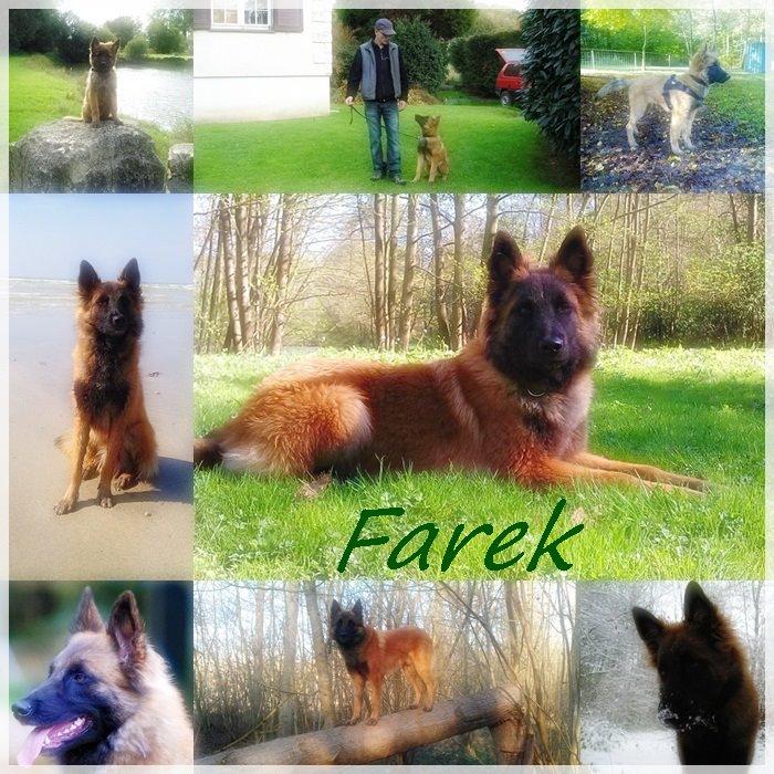 farex,15