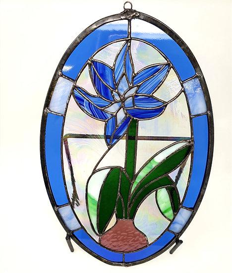 Oval Blue Amaryllis