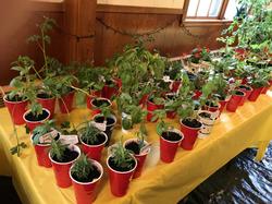 Plant&Pantry Sale 2021