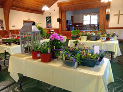 Plant&Pantry Sale(May, 2019)