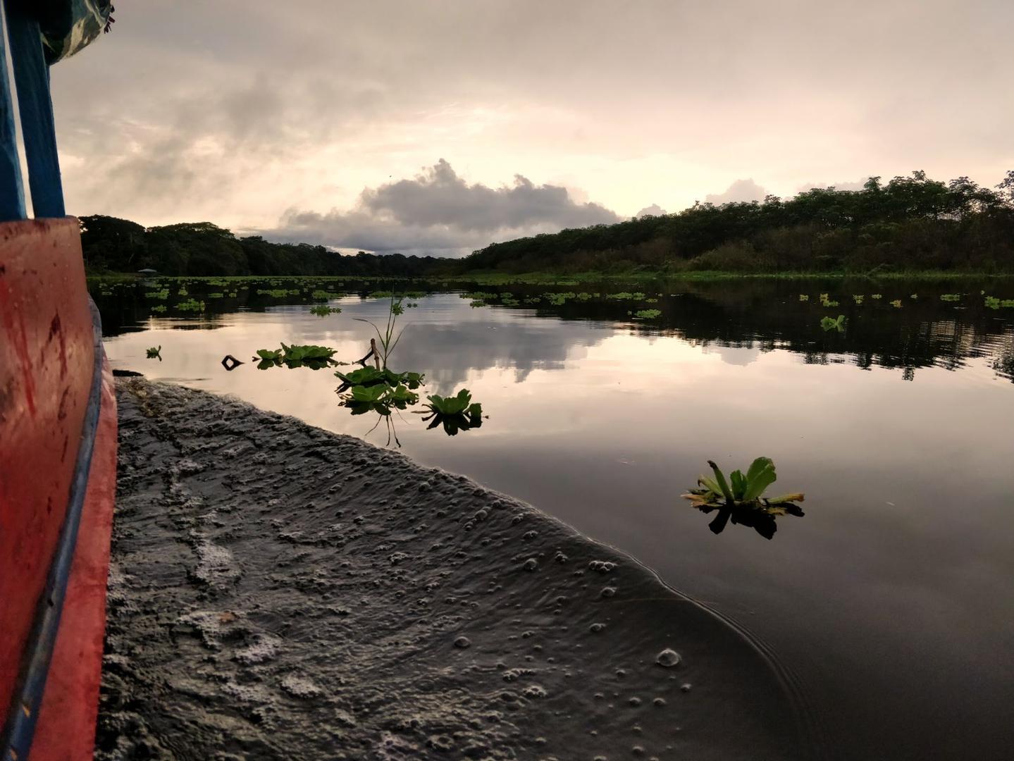 Amazon River 3