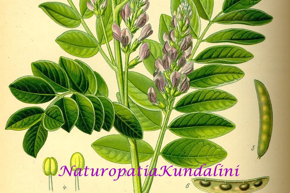 liquirizia naturopatia kundalini giada aghi padova