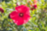 DSC_6189.jpg