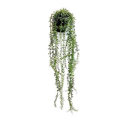 עציץ בלס ירוק בהיר קטן