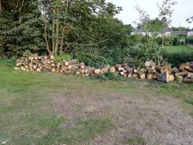 Wood available to collect