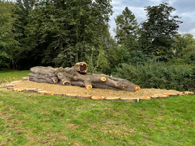 Humphrey's Meadow tree work continues today