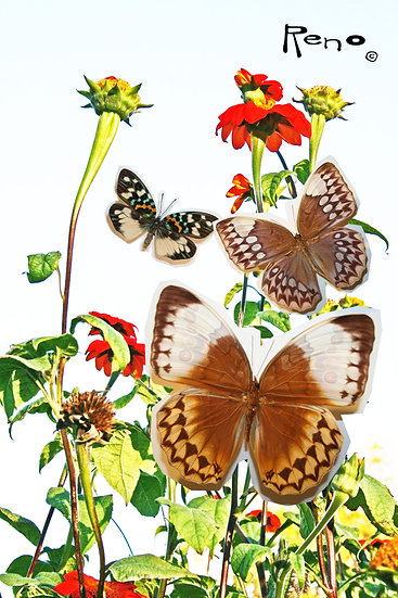 butterfly print with plants from Chicago artist