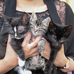 kitten-rescues.jpg