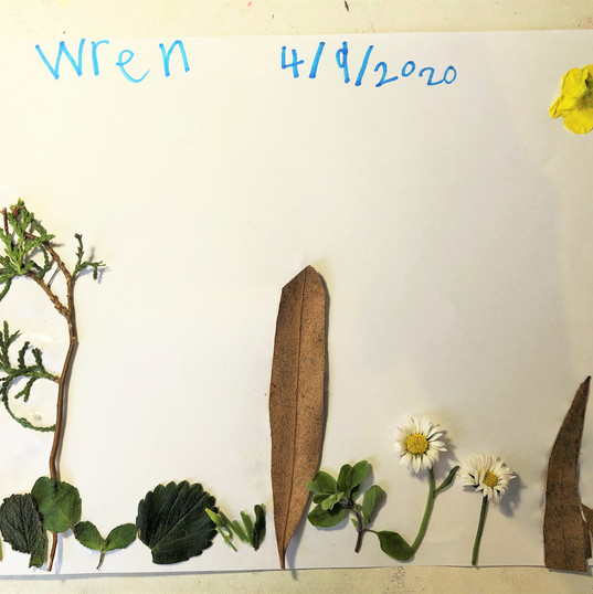 Wren's Collage