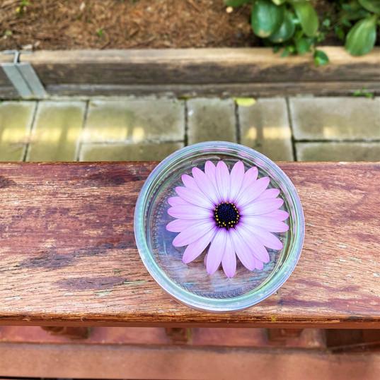 Sophie's Floating Flower