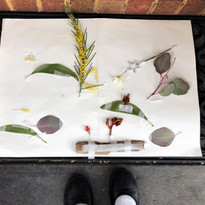 Sofia's Collage