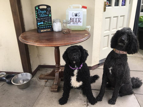 Dogs are welcome at The Barley Mow