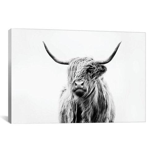 Portrait Of A Highland Cow by Dorit Fuhg Canvas Print