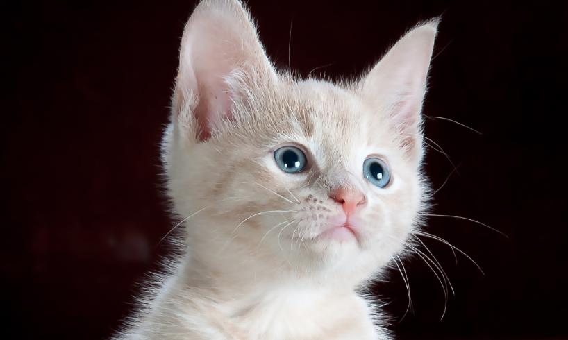 cute orange kitten