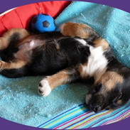 puppy rolling over
