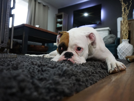 How to Avoid These 5 Common Doggie Disasters at Home