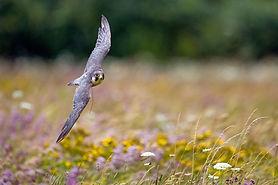 Hawk Conservancy 1.jpg