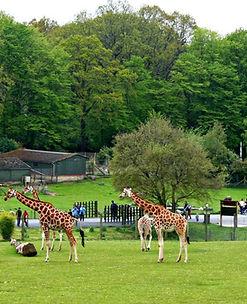 Marwell-Zoo.jpg