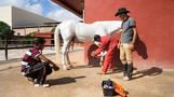 Equestrian Arts School Ain Atiq