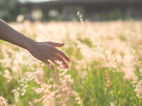Women hand touching a grass flower on th