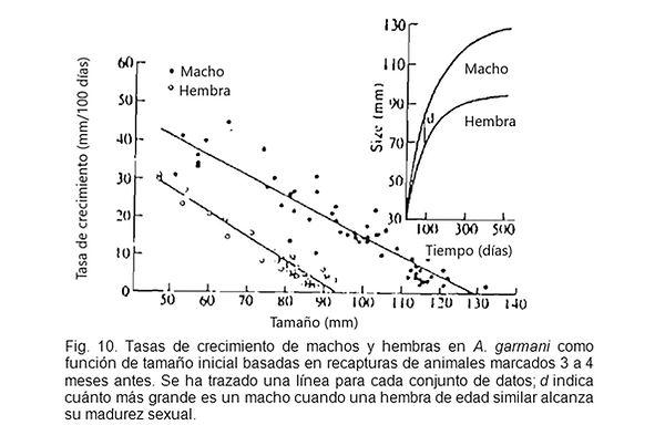 Trivers Figura 10.jpg