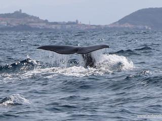 |08-06-2019| Sperm whale day