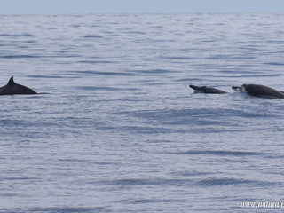 |25-08-2019 pm| Beaked whales, Sperm whales and dolphins!