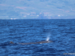 |09-09-2019| Sperm whales North and South of the islands
