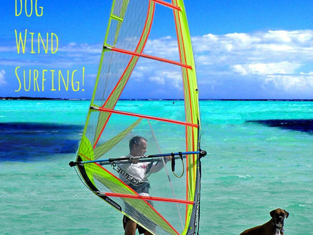 Take your dog Windsurfing
