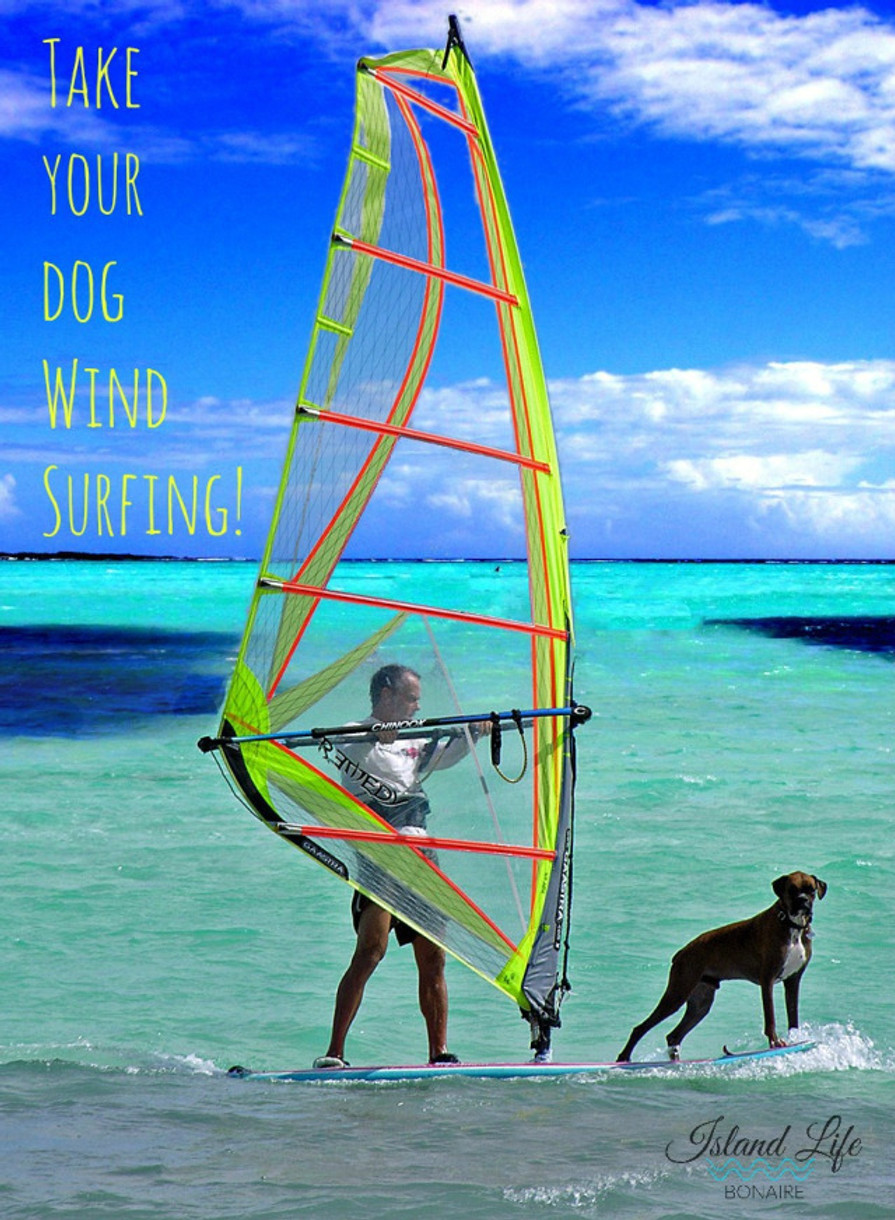 Take your dog windsurfing!