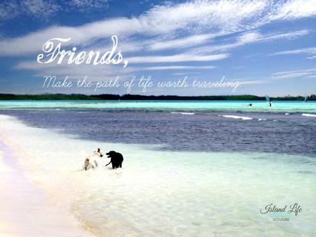 Swim with your best friend.