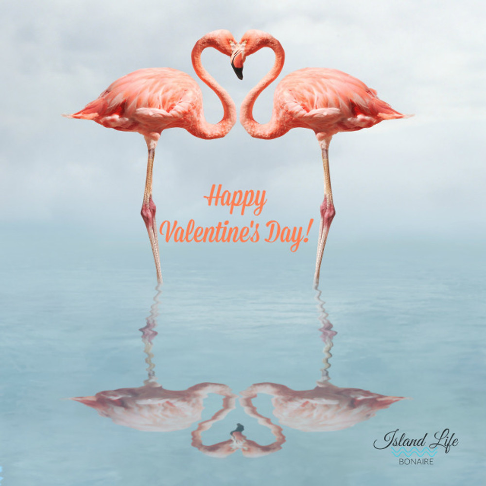 Flamingos in water making a heart shape. Bonaire
