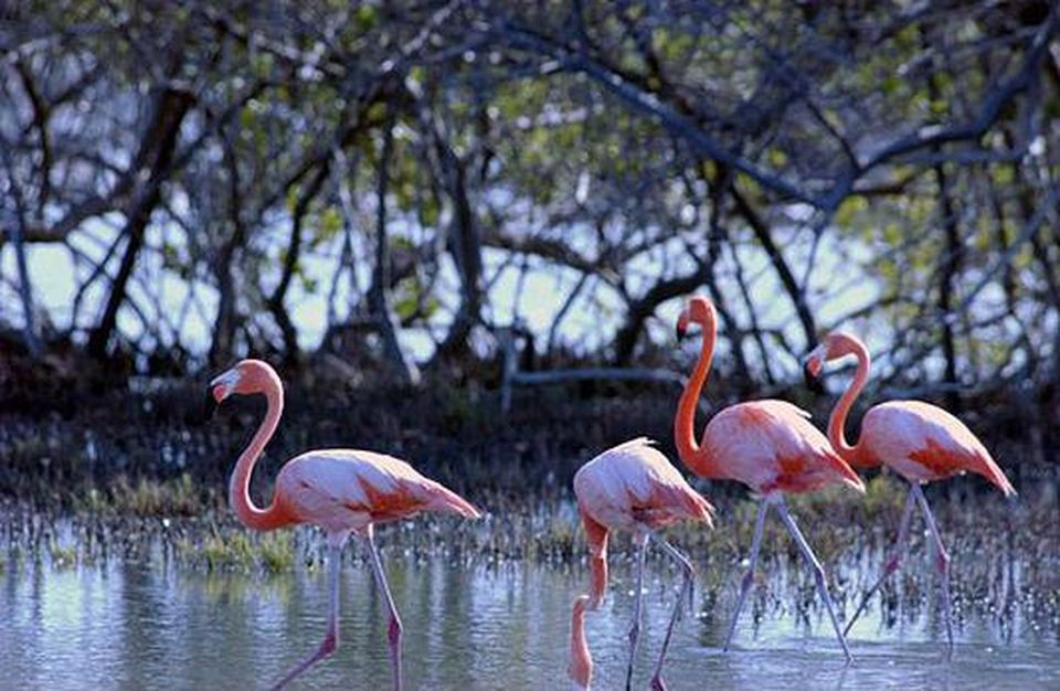 Flamingo Scanctuary on Bonaire