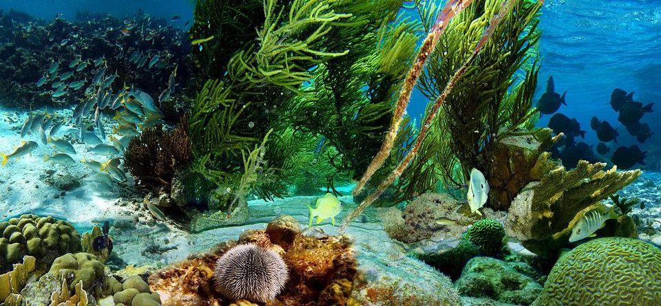 Bonaire's Coral Reefs