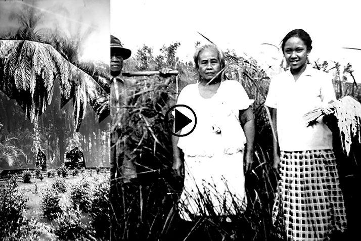 The Ylang-Ylang project-VideoPlay.jpg