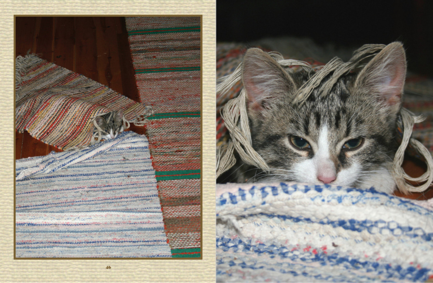 小貓在玩捉迷藏