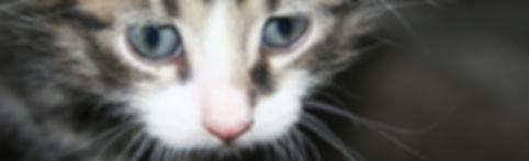 kitty_baby_oikea.jpg