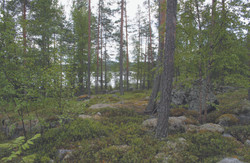 forest finland