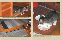 Kitten's new home