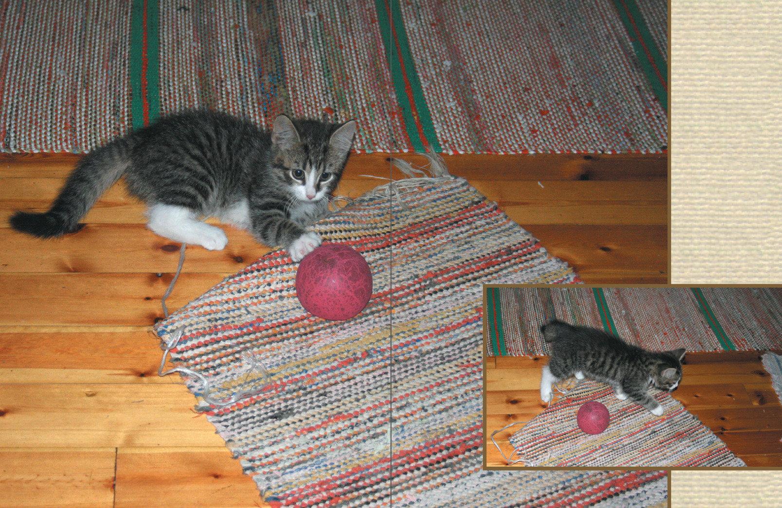 Kissanpentu leikkii