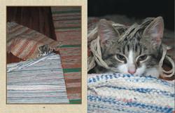 Fun kitten