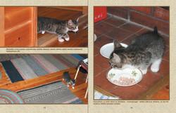 Kissanpentu saapuu uuten kotiin