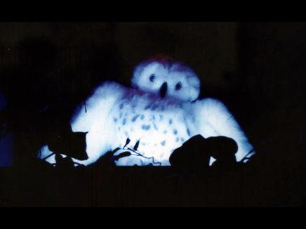 Peacemaker owl small.jpg